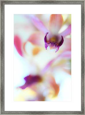 Soft Seduction. Orchids Framed Print by Jenny Rainbow