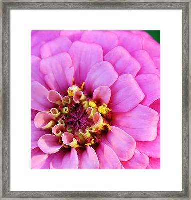 Soft To The Touch Framed Print by Bruce Bley