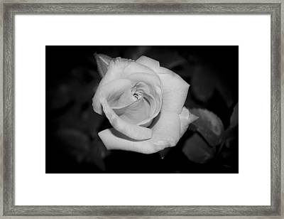 Soft Velvet Framed Print