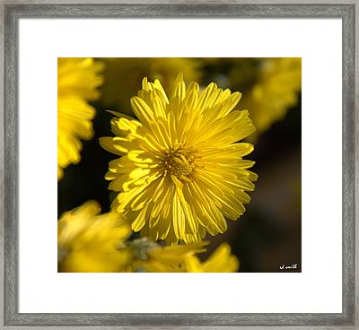 Soft Yellow Glow Framed Print by Ed Smith