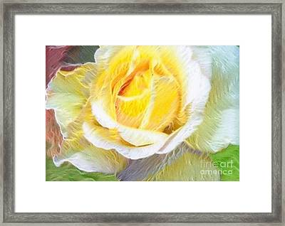 Softly Blooming Rose Framed Print by AE Hansen