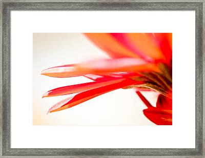Softly Red Framed Print by April Reppucci