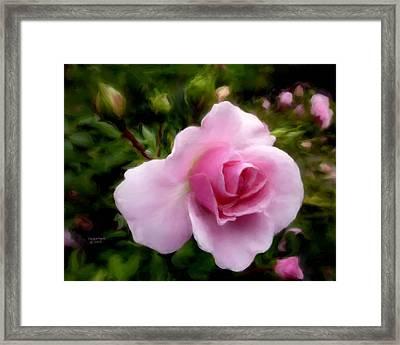 Softly Romantic Framed Print
