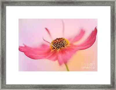 Softness Framed Print by Jacky Parker