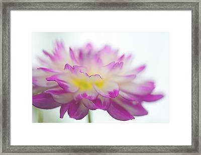 Softness Framed Print by Michelle Armstrong