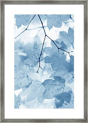 Softness Of Blue Leaves Framed Print by Jennie Marie Schell