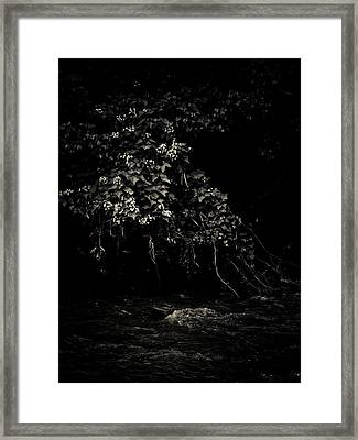 Solace Framed Print by Jessica Brawley