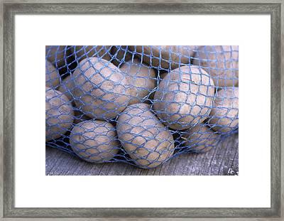Solanum Tuberosum 'charlotte' Framed Print by Maxine Adcock