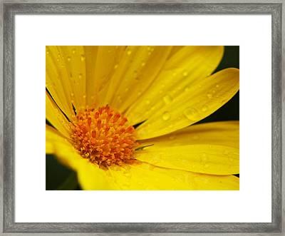 Solar Framed Print by Rob Amend