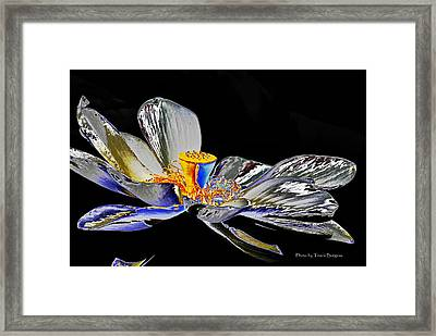 Framed Print featuring the photograph Solarized Lotus B by Travis Burgess