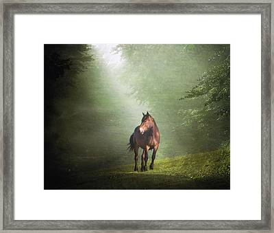 Solitary Horse Framed Print by Christiana Stawski