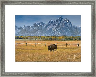 Solitary Moments Framed Print