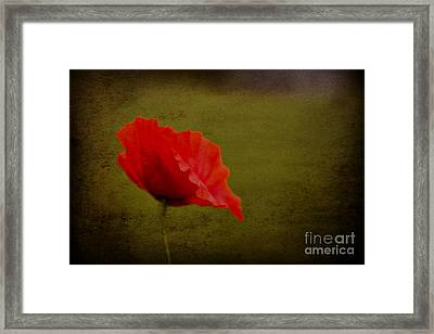 Solitary Poppy. Framed Print by Clare Bambers