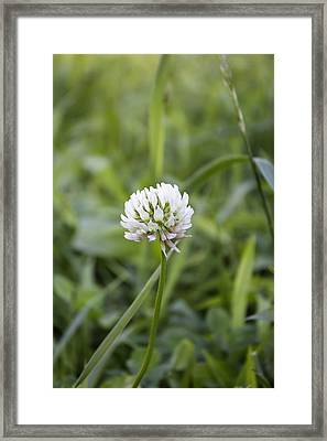 Framed Print featuring the photograph Solitude by Kathleen Holley