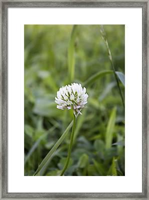 Solitude Framed Print by Kathleen Holley