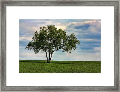 Solitude Framed Print by Matt Dobson