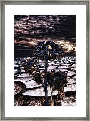 Solitude Framed Print by Mo T