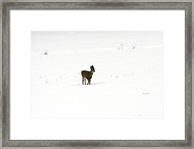Solitude Framed Print by Shirley Mailloux