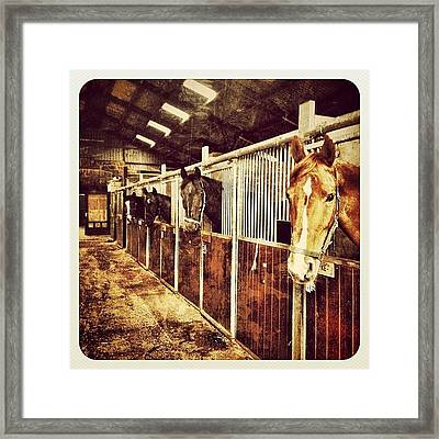 Some Of The Many Horses Here At The Framed Print