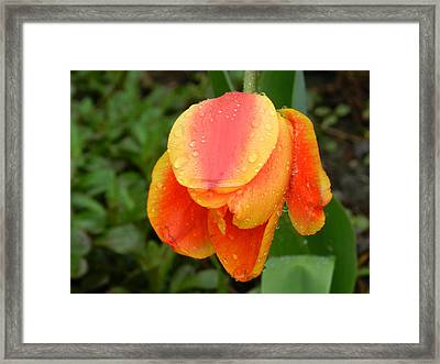 Some Rain Framed Print by Dennis Leatherman