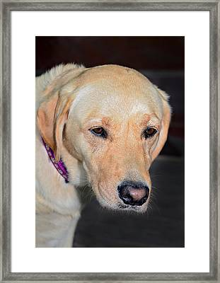 Someone Call Me Framed Print by Susan Leggett