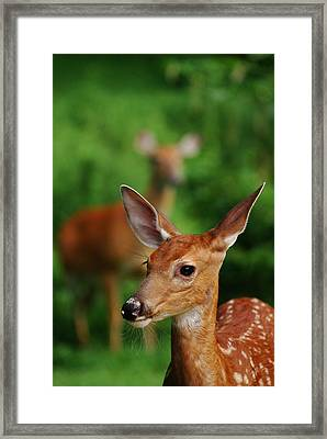 Someone To Watch Over Me Framed Print by Lori Tambakis