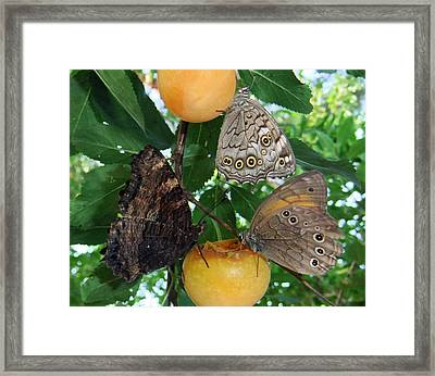 Something Fruity  Framed Print by Eric Kempson