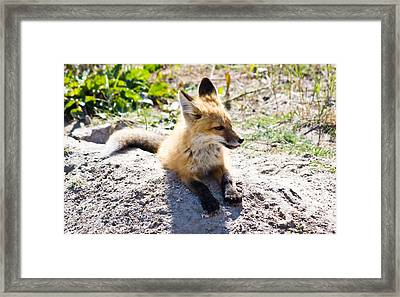 Something Looks Tasty Framed Print