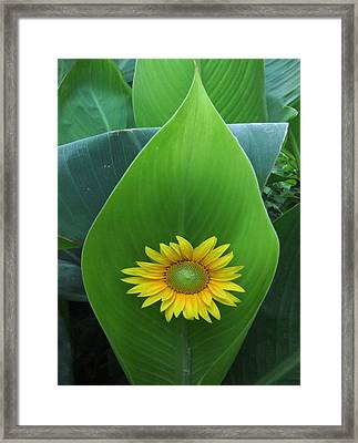 Something Simple Framed Print by Eric Kempson