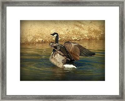 Something To Flap About Framed Print by Cindy Wright