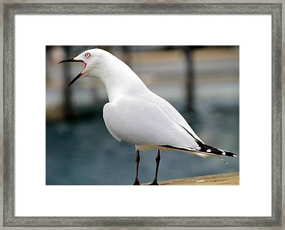 Framed Print featuring the photograph Something To Say by Laurel Talabere
