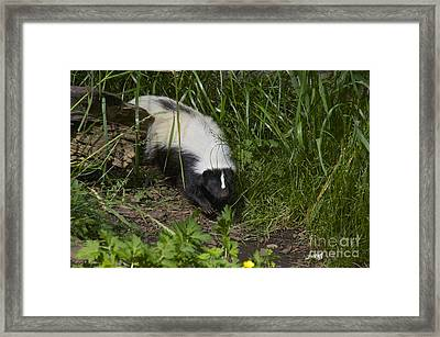 Something To Sniff At Framed Print by Sean Griffin