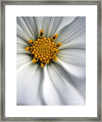 Framed Print featuring the photograph Sonata Cosmos White by Henrik Lehnerer