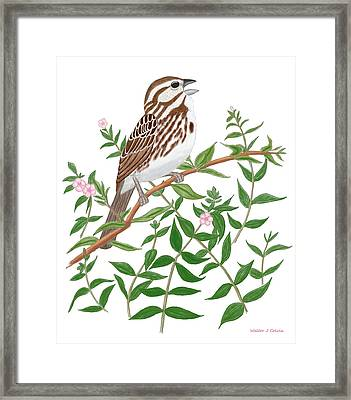 Framed Print featuring the digital art Song Sparrow by Walter Colvin