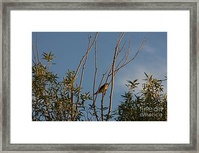 Framed Print featuring the photograph Songbird by Marta Alfred