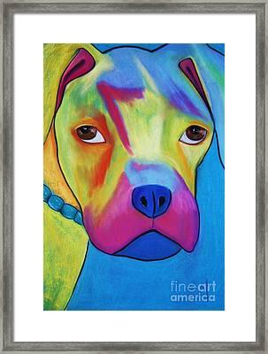 Sonny Blu Framed Print by Melinda Etzold