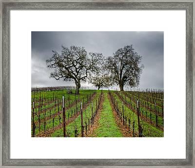 Sonoma County Vineyard Framed Print by Joan McDaniel