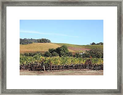 Sonoma Vineyards - Sonoma California - 5d19307 Framed Print by Wingsdomain Art and Photography