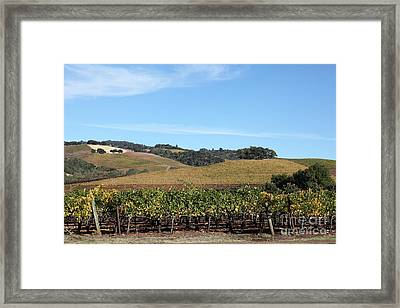 Sonoma Vineyards - Sonoma California - 5d19309 Framed Print by Wingsdomain Art and Photography