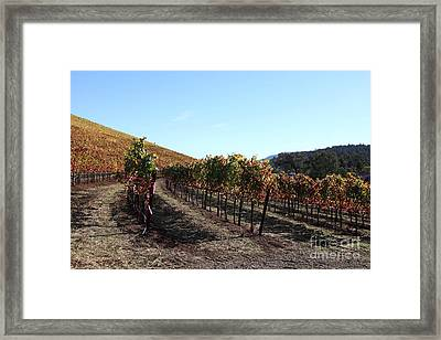 Sonoma Vineyards - Sonoma California - 5d19311 Framed Print by Wingsdomain Art and Photography