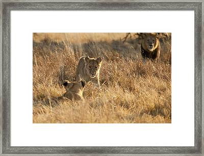Sons And Father Framed Print by Jennifer