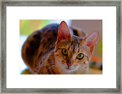 Sookie All Grown Up Framed Print by Frank Feliciano