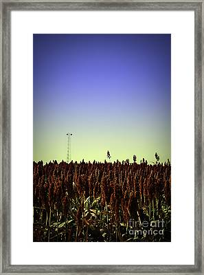 Sorghum Fields Forever Framed Print by Trish Mistric
