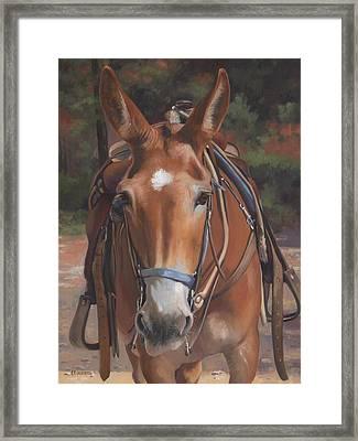 Sorrel Mule Framed Print