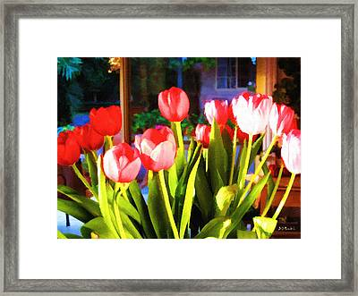 Souha's Tulips Framed Print by Brian D Meredith