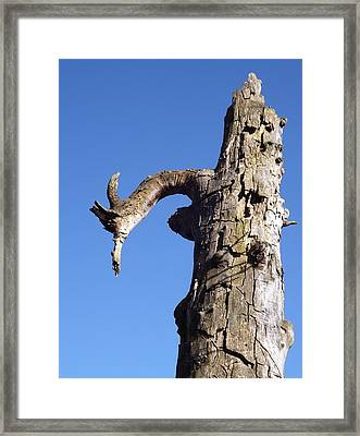 Framed Print featuring the photograph Soul Of The Wood Pecker by Gerald Strine