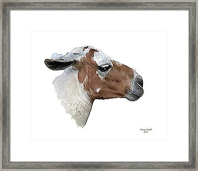South American Goat Framed Print by Larry Small