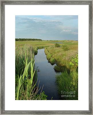 South Cape Channel Framed Print by Gene  Marchand