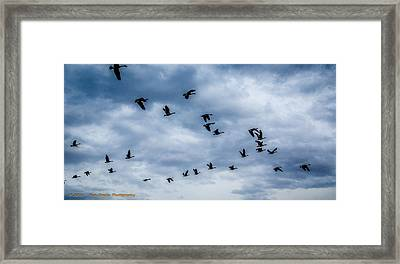 Southern Destination Framed Print by Dan Crosby