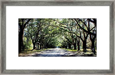 Southern Drama Framed Print